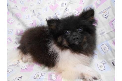 販売中の茨城県のミックス犬の1枚目